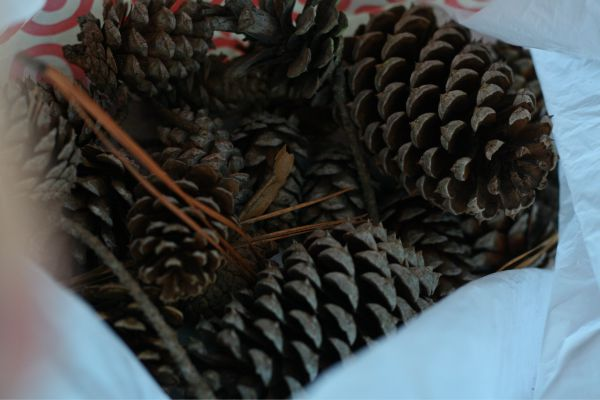 Easy Glitter Pinecones - easy centerpiece or vase filler. All it takes is glitter Mod Podge + pinecones!